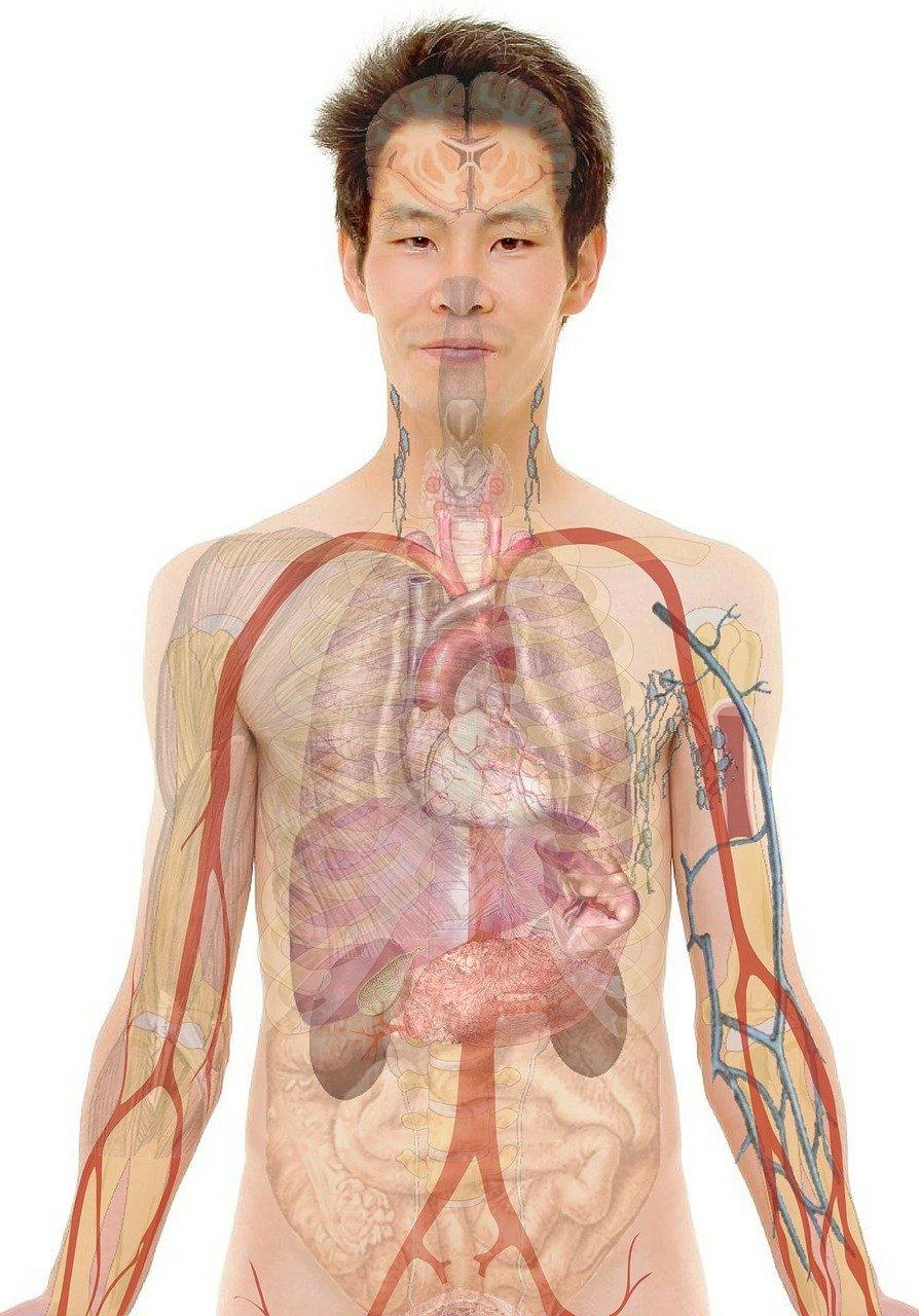 Quels sont les 5 organes qui permettent d'éliminer les toxines de notre organisme ?
