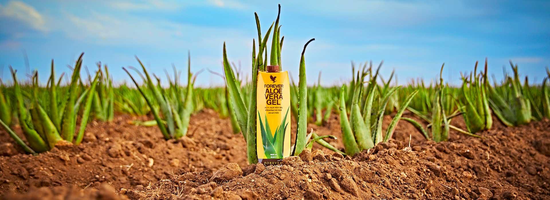 Pourquoi choisir nos pulpes Aloe vera en briques Tetra Pak ?